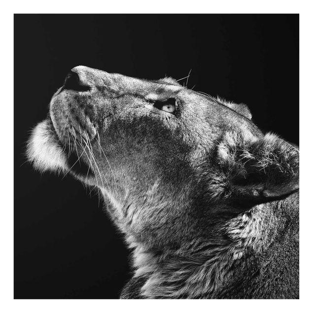 Produktfoto Glasbild - Portrait einer Löwin - Quadrat 1:1