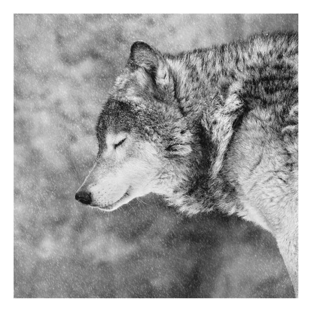 Produktfoto Glasbild - Winter Wolf - Quadrat 1:1