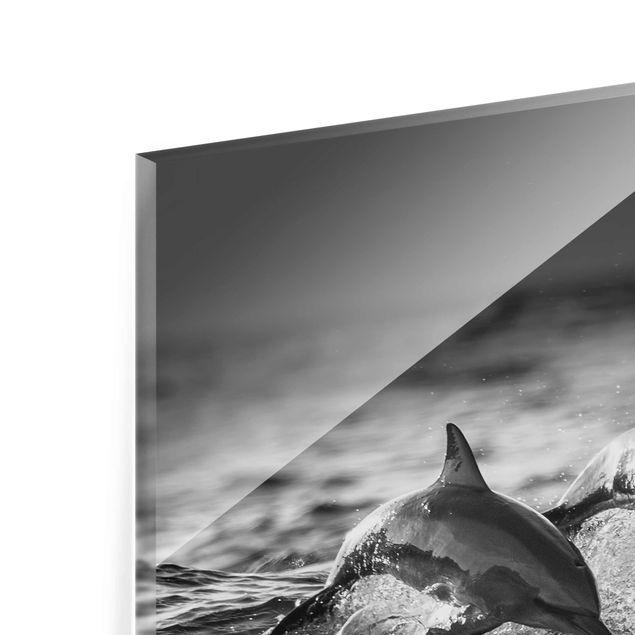 Produktfoto Glasbild - Zwei springende Delfine - Quadrat 1:1