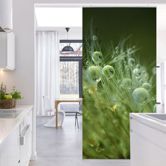 Produktfoto Raumteiler - Grüne Samen im Regen - 250x120cm
