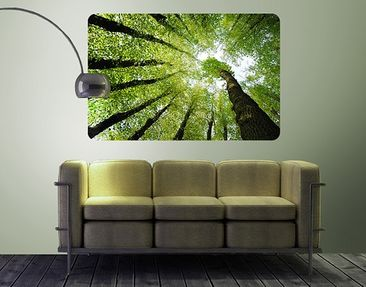 Produktfoto Wall Mural Trees Of Life
