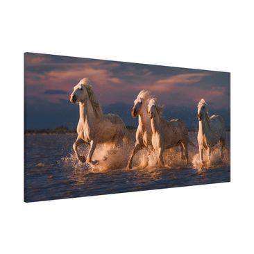 Immagine del prodotto Lavagna magnetica - Cavalli selvaggi in Kamargue - Panorama formato orizzontale