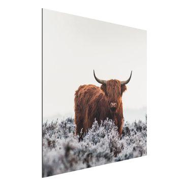 Immagine del prodotto Stampa su alluminio - Bisonte Nelle Highlands - Quadrato 1:1