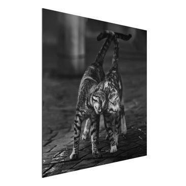 Produktfoto Aluminium Print - Kätzchenfreundschaft - Quadrat 1:1