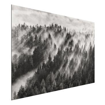 Immagine del prodotto Stampa su alluminio - Raggi Luce nella foresta di conifere - Orizzontale 2:3