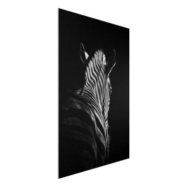 Produktfoto Forex Fine Art Print - Dunkle Zebra Silhouette - Hochformat 3:2