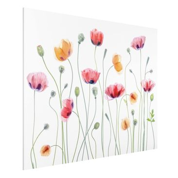 Produktfoto Forex Fine Art Print - Klatschmohn Party - Querformat 3:4