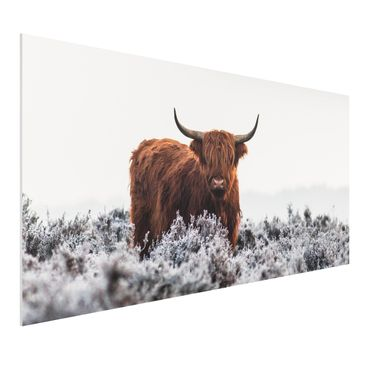 Produktfoto Forex Fine Art Print - Bison in den Highlands - Querformat 1:2