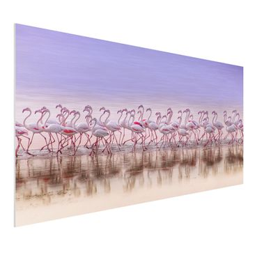 Produktfoto Forex Fine Art Print - Flamingo Party - Querformat 1:2