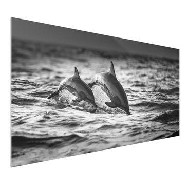 Immagine del prodotto Stampa su Forex - Due delfini che saltano - Orizzontale 1:2