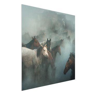 Produktfoto Forex Fine Art Print - Wilde Pferde - Quadrat 1:1