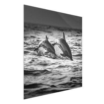 Immagine del prodotto Stampa su Forex - Due delfini che saltano - Quadrato 1:1