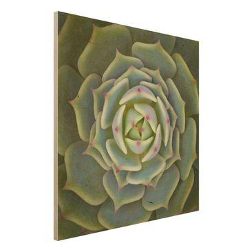 Immagine del prodotto Stampa su legno - Pianta Grassa - Echeveria Ben Badis - Quadrato 1:1