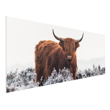Produktfoto Forex Fine Art Print - Bison in den Highlands - Panorama