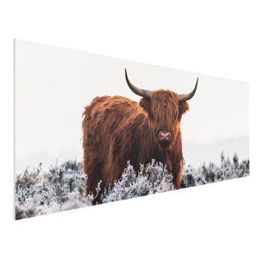 Immagine del prodotto Stampa su Forex - Bisonte Nelle Highlands - Panoramico