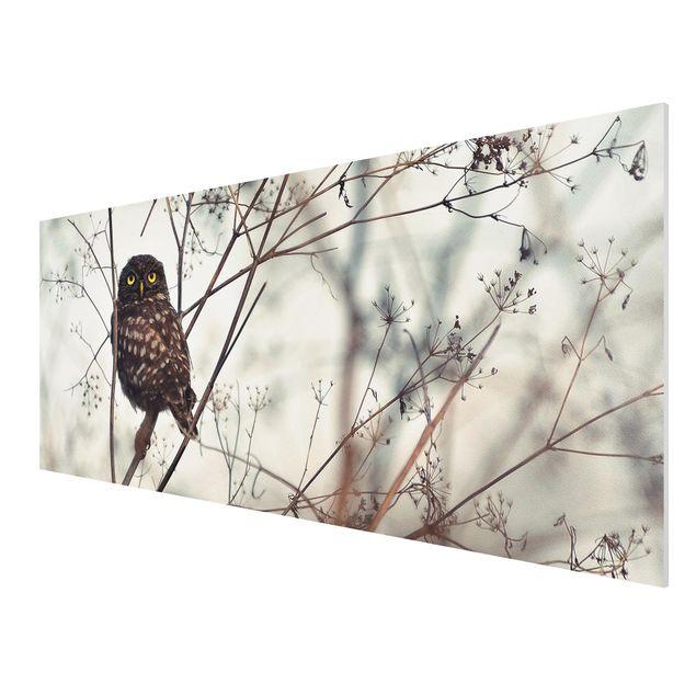 Produktfoto Forex Fine Art Print - Eule im Winter - Panorama