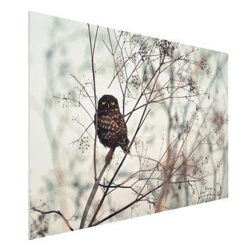 Produktfoto Forex Fine Art Print - Eule im Winter - Querformat 2:3