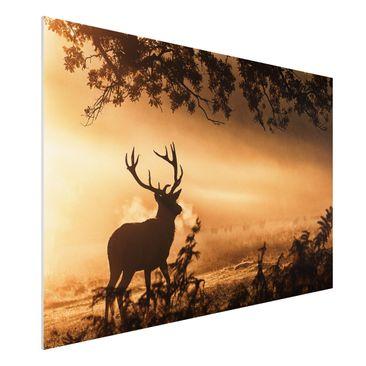 Produktfoto Forex Fine Art Print - Hirsch im Winterwald - Querformat 2:3