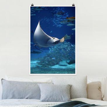Immagine del prodotto Poster - Batoidea - Verticale 3:2