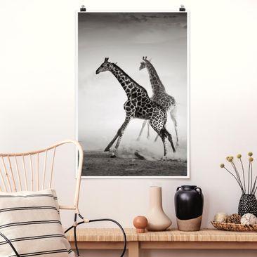 Immagine del prodotto Poster - Giraffe Caccia - Verticale 3:2