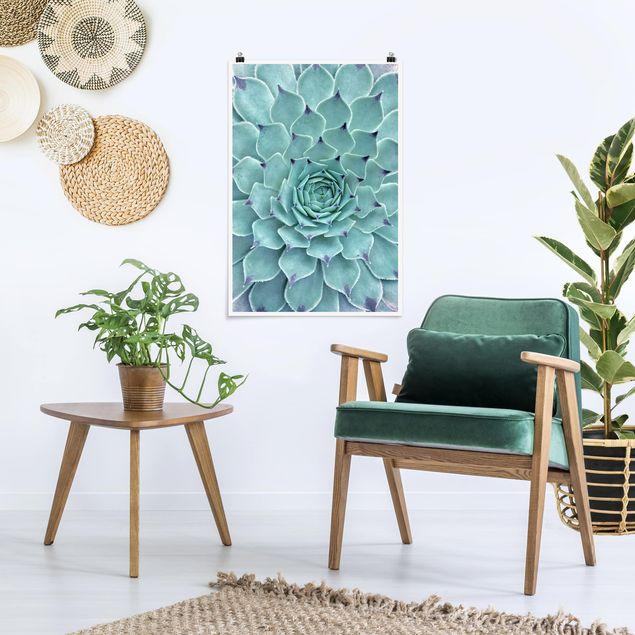 Produktfoto Poster - Kaktus Agave - Hochformat 3:2