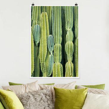 Produktfoto Poster - Kaktus Wand - Hochformat 3-2 Material matt Artikelnummer 249727-CU