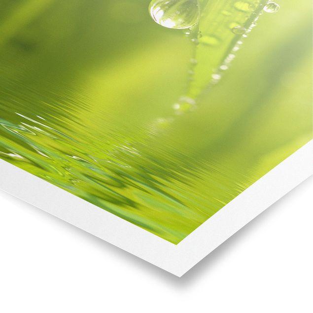 Produktfoto Poster - Morning Dew - Hochformat 3:2