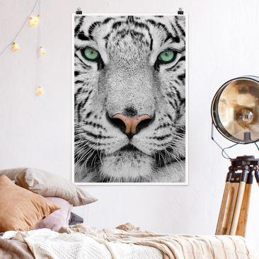 Produktfoto Poster - Weißer Tiger - Hochformat 3-2 Material matt Artikelnummer 249819-CU