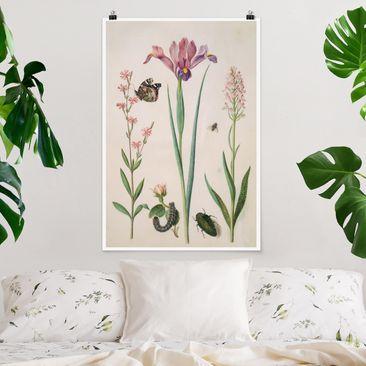 Produktfoto Poster - Anna Maria Sibylla Merian - Pechnelke und Rose - Hochformat 3-2 vergrößerte Ansicht in Wohnambiente Artikelnummer 249863-XWA