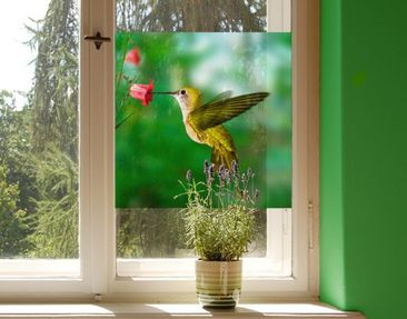 Produktfoto Fensterfolie - Sichtschutz Fenster Kolibri und Blüte - Fensterbilder