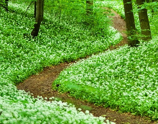 Produktfoto Selbstklebendes Wandbild Romantischer Waldweg