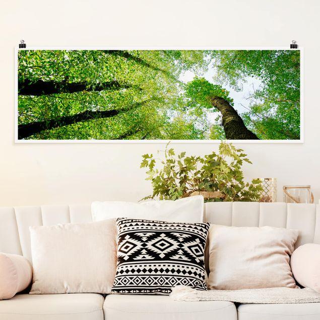 Produktfoto Poster - Bäume des Lebens - Panorama Querformat