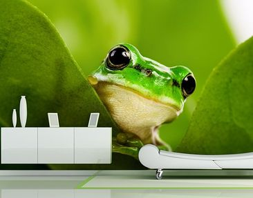 Product picture Photo Wall Mural Tree Frog