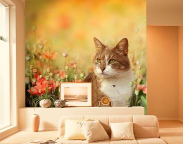 Produktfoto Photo Wall Mural Cat In Poppy Field