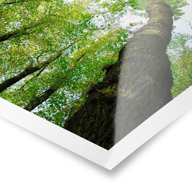 Produktfoto Poster - Bäume des Lebens - Hochformat 4:3