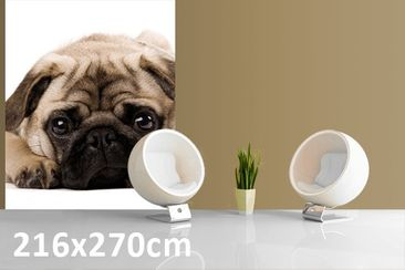 Product picture Photo Wall Mural Cuddly Pug