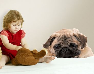 Product picture Wall Decal no.426 Cuddly Pug