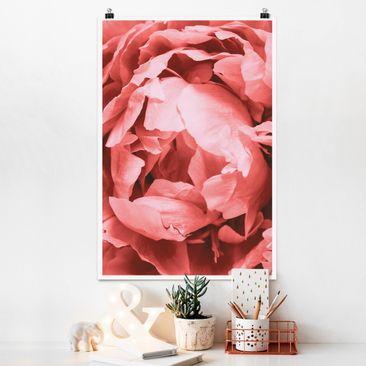 Produktfoto Poster - Pfingstrose Blüte Koralle - Hochformat 3:2