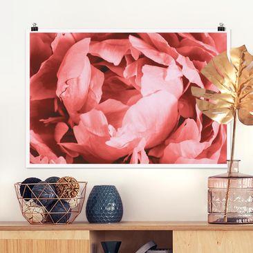 Produktfoto Poster - Pfingstrose Blüte Koralle - Querformat 2:3