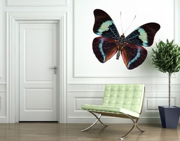Produktfoto Wall Decal no.423 Lepidoptera