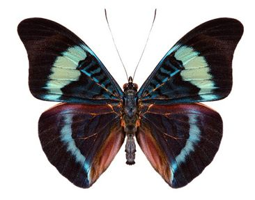 Product picture Wall Decal no.423 Lepidoptera