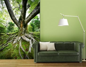 Produktfoto Photo Wall Mural Old Tree