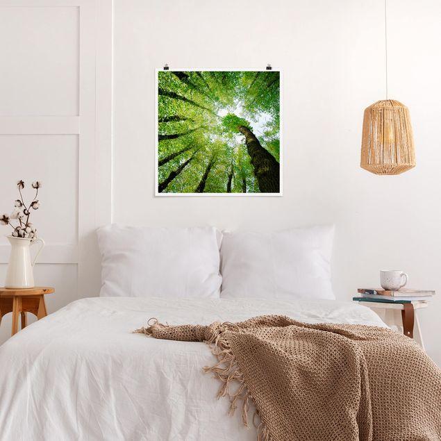 Produktfoto Poster - Bäume des Lebens - Quadrat 1:1