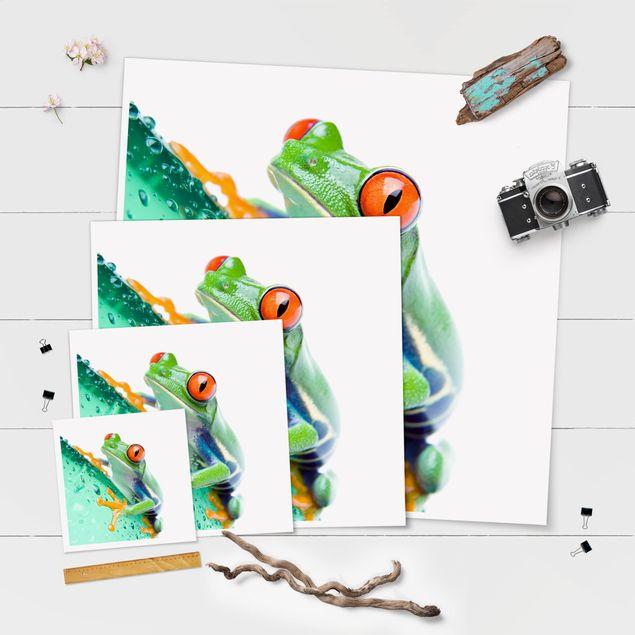 Produktfoto Poster - Frog - Quadrat 1:1