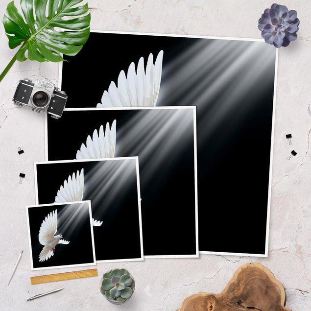Produktfoto Poster - Holy Dove - Quadrat 1:1