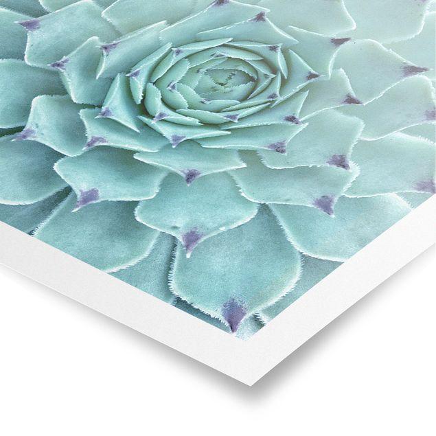 Produktfoto Poster - Kaktus Agave - Quadrat 1:1