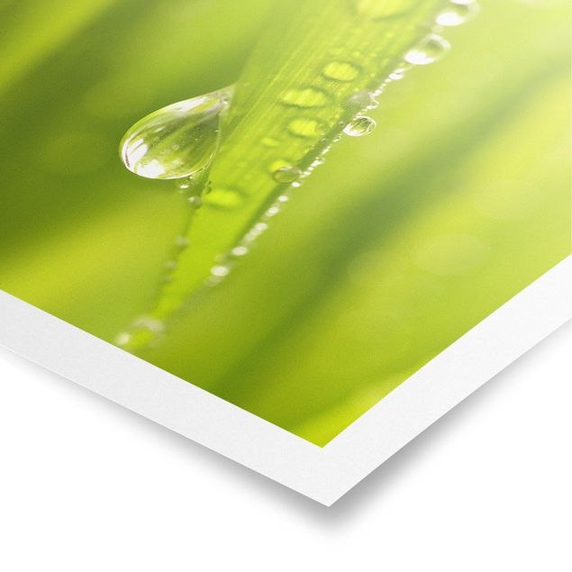 Produktfoto Poster - Morning Dew - Quadrat 1:1