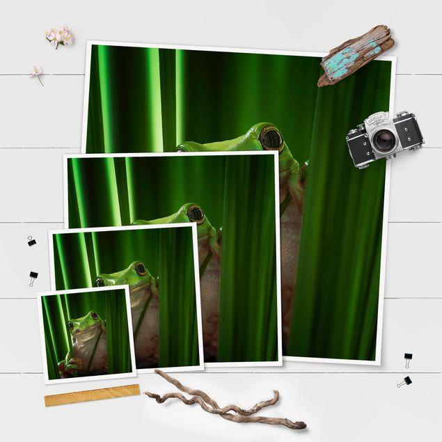 Produktfoto Poster - Fröhlicher Frosch - Quadrat 1:1
