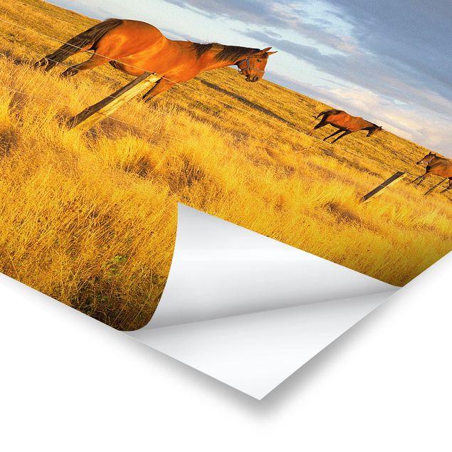 Produktfoto Poster - Feldstraße und Pferde bei Abendsonne - Quadrat 1:1