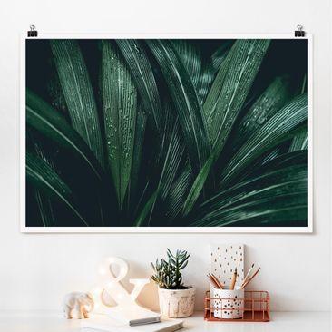 Produktfoto Poster - Grüne Palmenblätter - Querformat 2-3 Material matt Artikelnummer 261113-CU